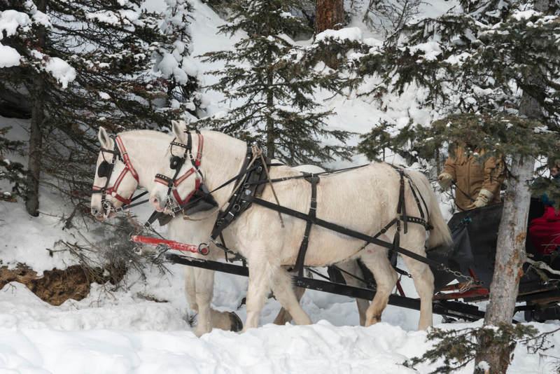 Horse Sleighing in Lake Louise