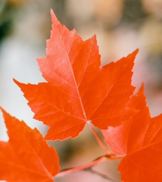 Moving to Canada Checklist