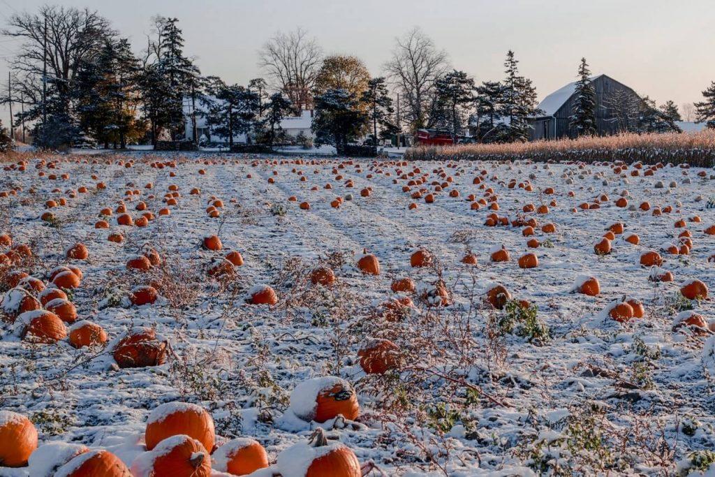 Pumpkin Farm Ontario weekend getaway