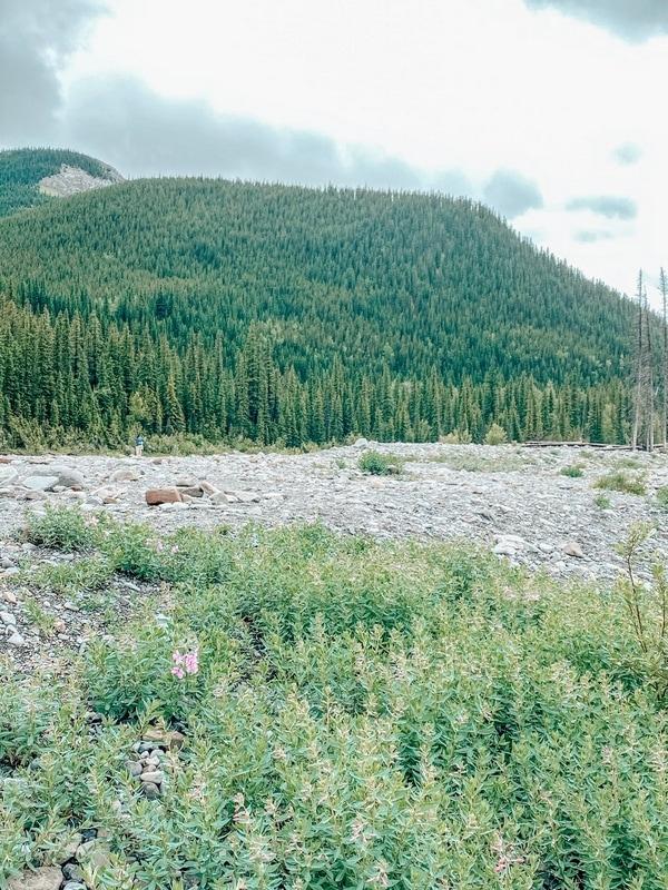 Scenic trails in Bragg Creek