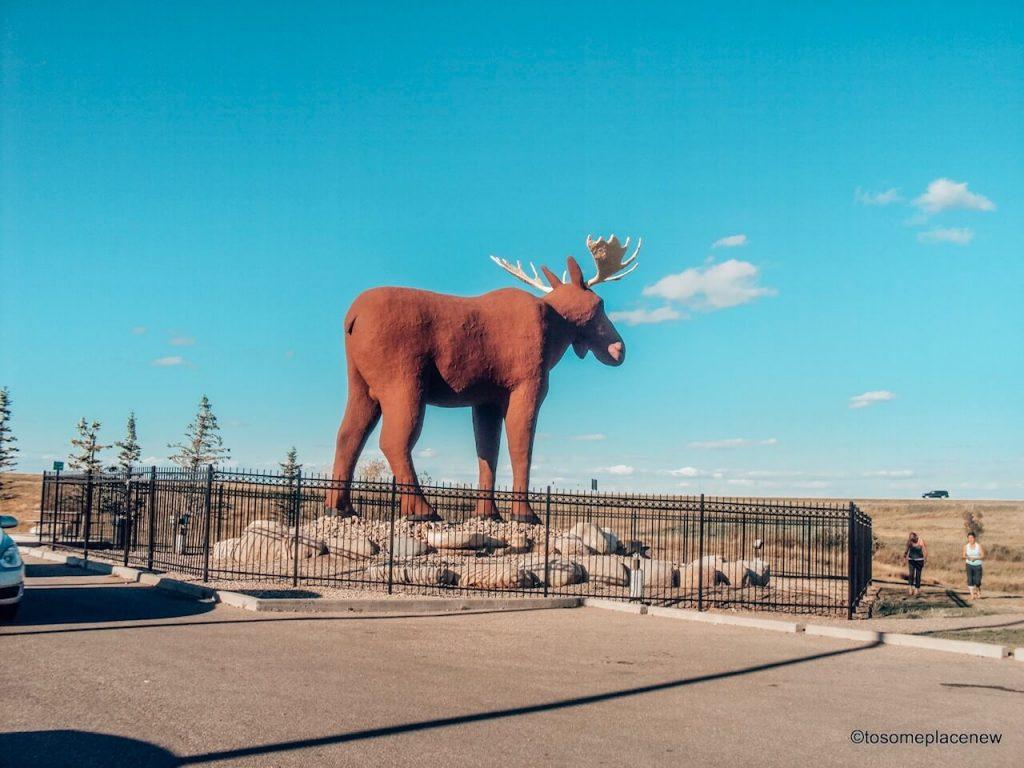 The Big Moose in Moose Jaw