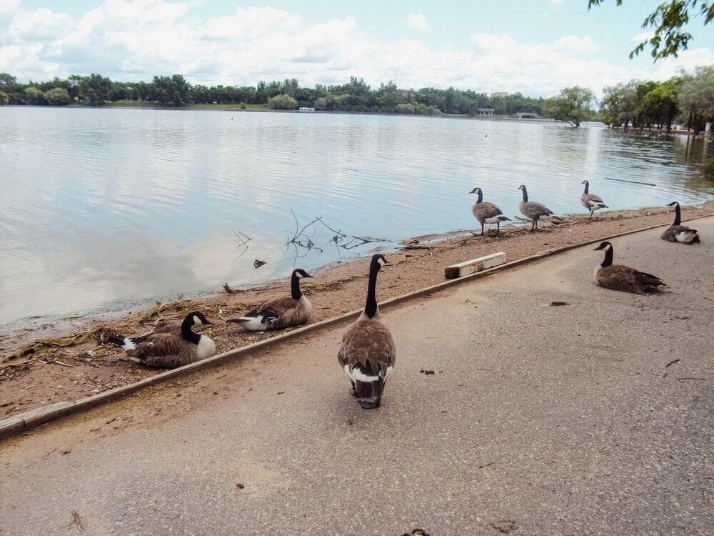 Wascana Centre Park Regina
