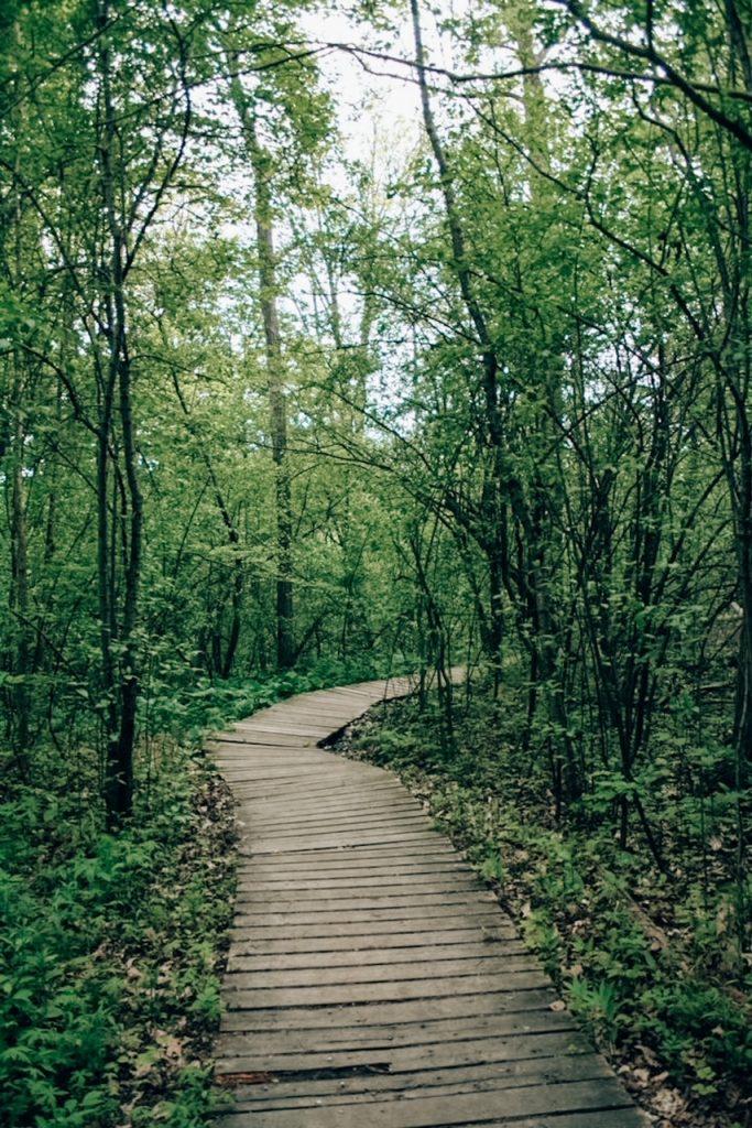 Komoka White Trail Broad walk through the forest