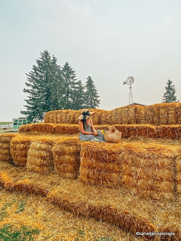 Bale in Edmonton corn maze